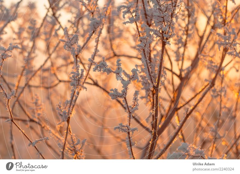 hoarfrost Harmonious Well-being Contentment Relaxation Calm Meditation Winter Christmas & Advent Nature Plant Ice Frost Snow Tree Branch Freeze Glittering Cold