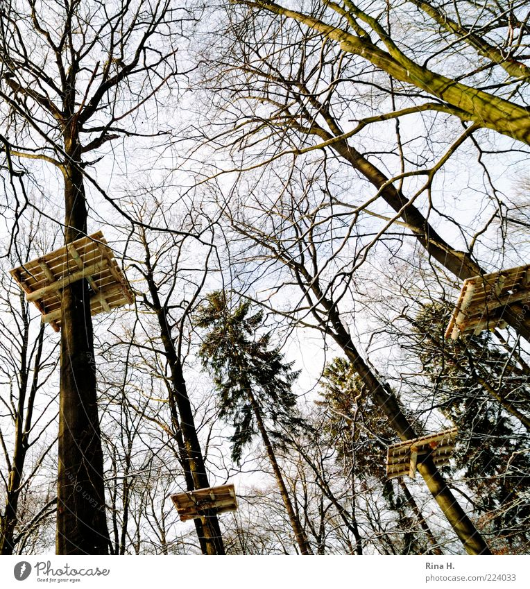 Nature Tree Landscape Winter Forest Environment Wood Perspective Tall Treetop Upward Bleak Vertical Branchage Hunting Blind Platform