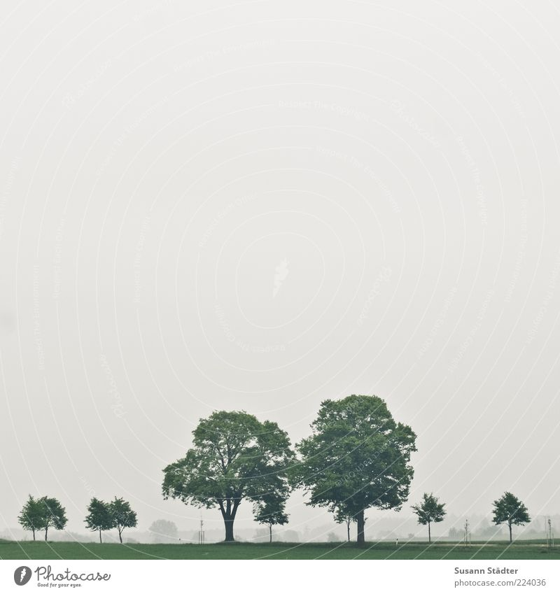 as it were Tree Foliage plant Far-off places Free Row of trees Nature Meadow Field Colour photo Cloudless sky Bad weather Exterior shot Deserted Copy Space left