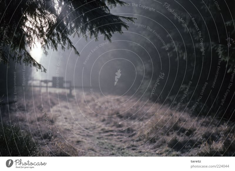 borderline experience Environment Nature Free Sunbeam tollgate Border Footpath Edge of the forest Hide Hidden Cold Fog Mysterious High Venn Coniferous forest