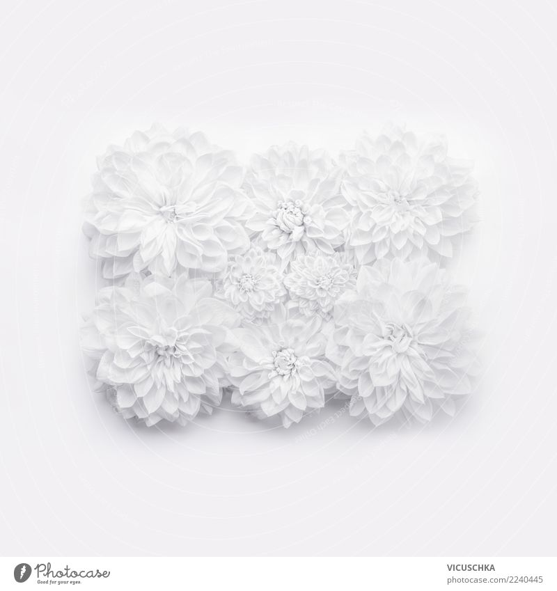 White flowers on white Style Design Decoration Event Feasts & Celebrations Valentine's Day Mother's Day Wedding Birthday Plant Flower Leaf Blossom Bouquet Sign