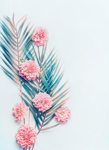 Creative layout with tropical palm leaves and flowers Style Design Desk Nature Plant Hip & trendy Pink Conceptual design creative pastel turquoise blue