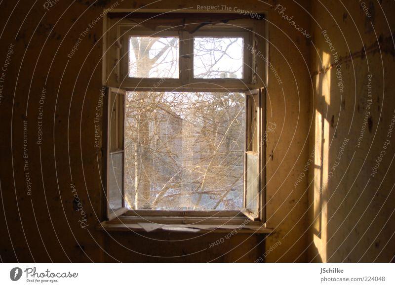 Open window Tree Ruin Wall (barrier) Wall (building) Window Window frame Concrete Wood Glass Old Esthetic Historic Broken Gold Hope Longing Transience
