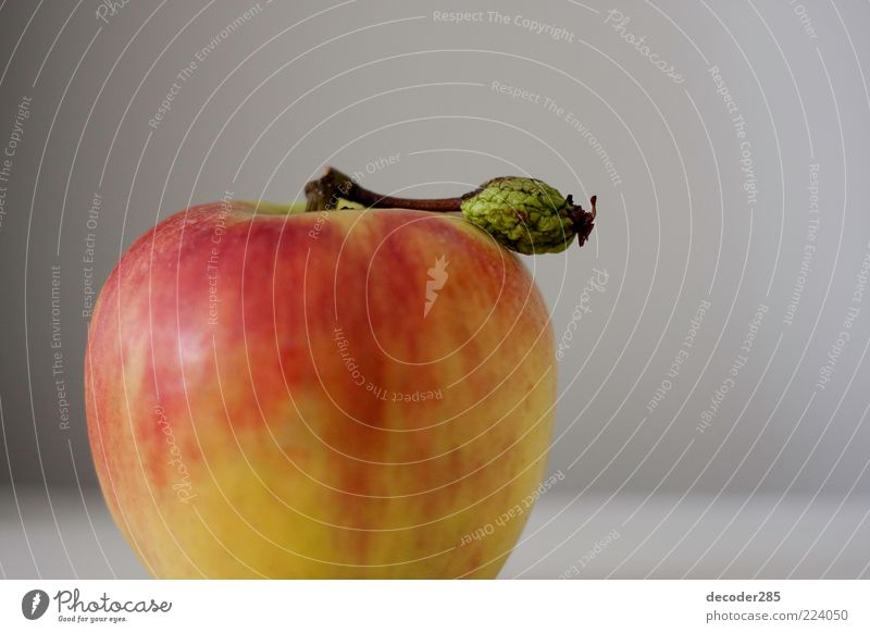 Apple with leaf Food Vegetarian diet Plant Agricultural crop Colour photo Interior shot Studio shot Deserted Copy Space right Neutral Background