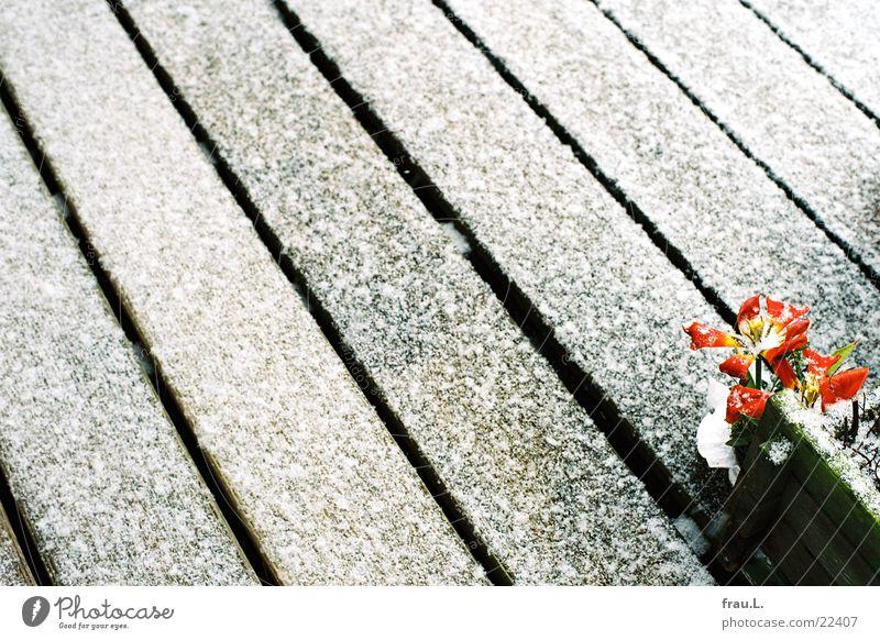 Flower Snow Spring Wood Line Living or residing Balcony Tulip March Flowerpot Window box