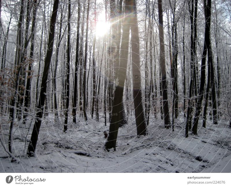 Nature White Tree Plant Sun Winter Forest Cold Landscape Weather Gloomy Tree trunk Silver Visual spectacle Branchage December