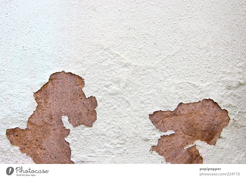 White Animal Wall (building) Wall (barrier) Funny Brown Facade Pair of animals Broken Pet Comic Joke Weathered Flake off Contour Comic strip character