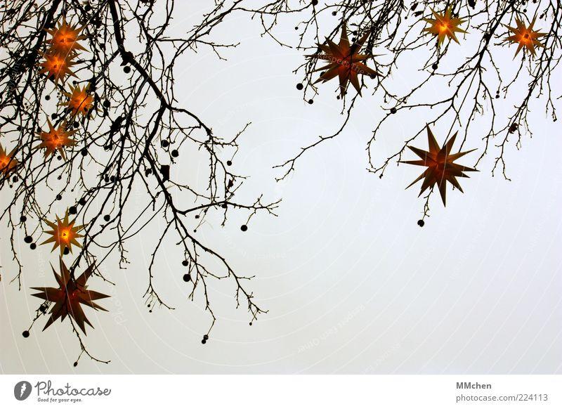 Sky Nature Christmas & Advent Tree Calm Winter Dark Cold Yellow Gray Feasts & Celebrations Fog Illuminate Decoration Romance Star (Symbol)