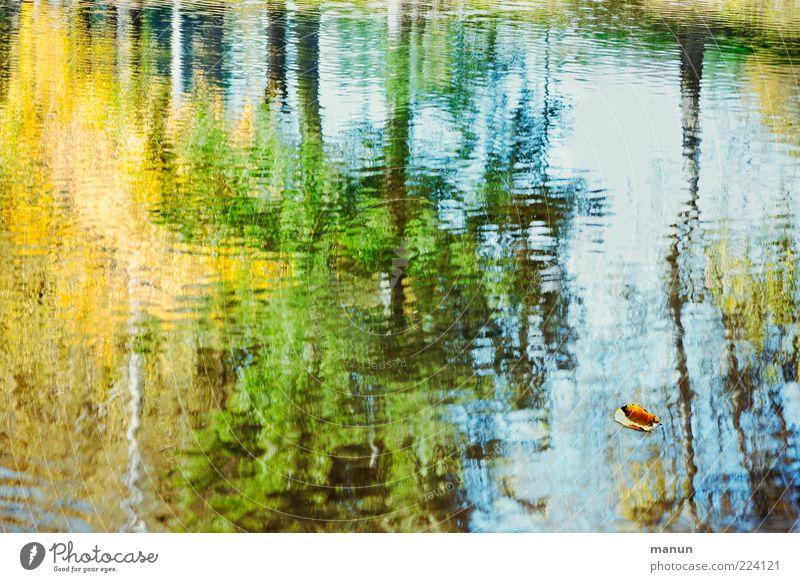 Nature Water Tree Leaf Forest Autumn Lake Natural Exceptional Waves Idyll Authentic Wet Transience Change Fantastic