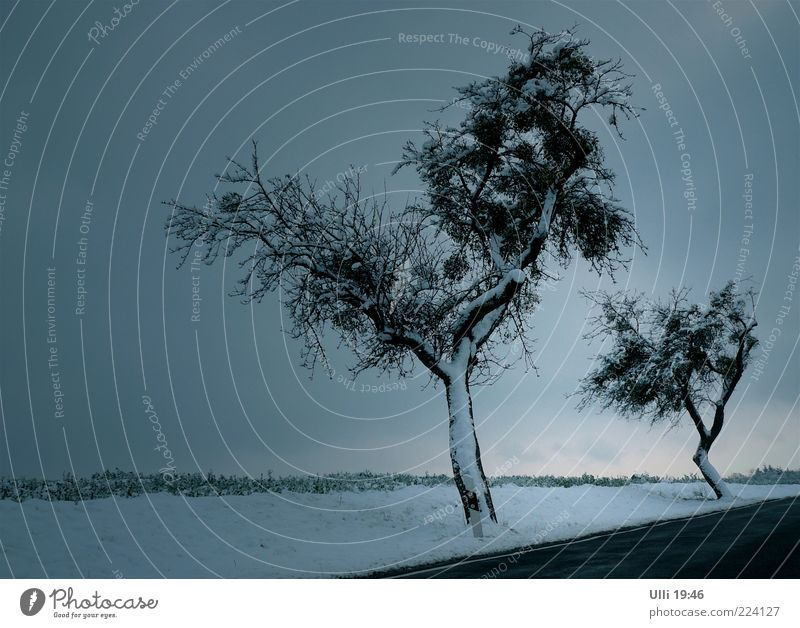 Nature Tree Blue Winter Calm Cold Dark Snow Landscape Gray Moody Ice Horizon Esthetic Gloomy Frost