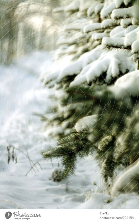 Nature White Tree Winter Cold Snow Lanes & trails Natural Moody Footpath Frost Fir tree December Fir branch January Snow layer