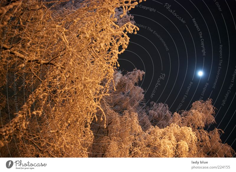 Sky Nature Tree Winter Calm Black Forest Cold Snow Environment Ice Gold Perspective Frost Moon Night sky