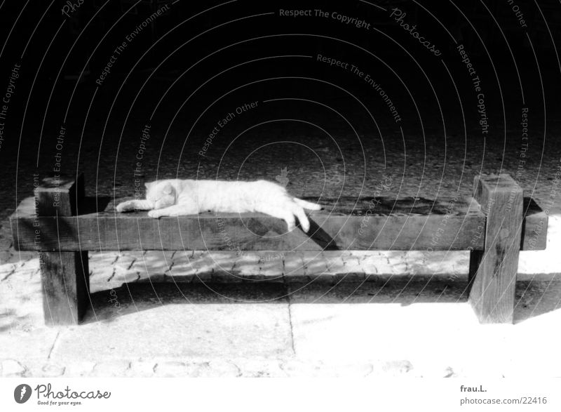 Sun Calm Animal Relaxation Cat Contentment Sleep Bench Lie France Mammal Marketplace South Domestic cat Recklessness Rest