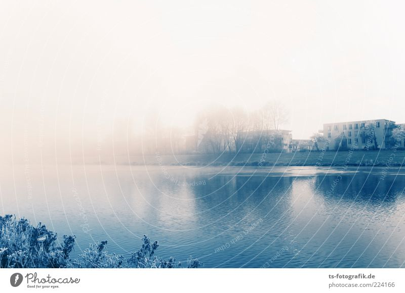 Press the fog bank. Environment Nature Landscape Elements Air Water Horizon Winter Bad weather Fog Ice Frost Tree Bushes Lakeside River bank Outskirts