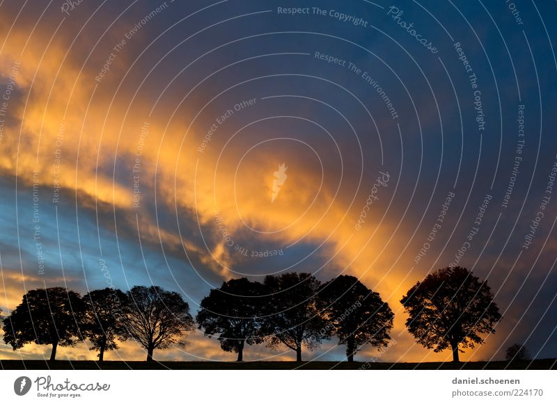 cloud show Environment Nature Climate Climate change Weather Thunder and lightning Tree Blue Yellow Black Avenue Clouds Copy Space right Copy Space top