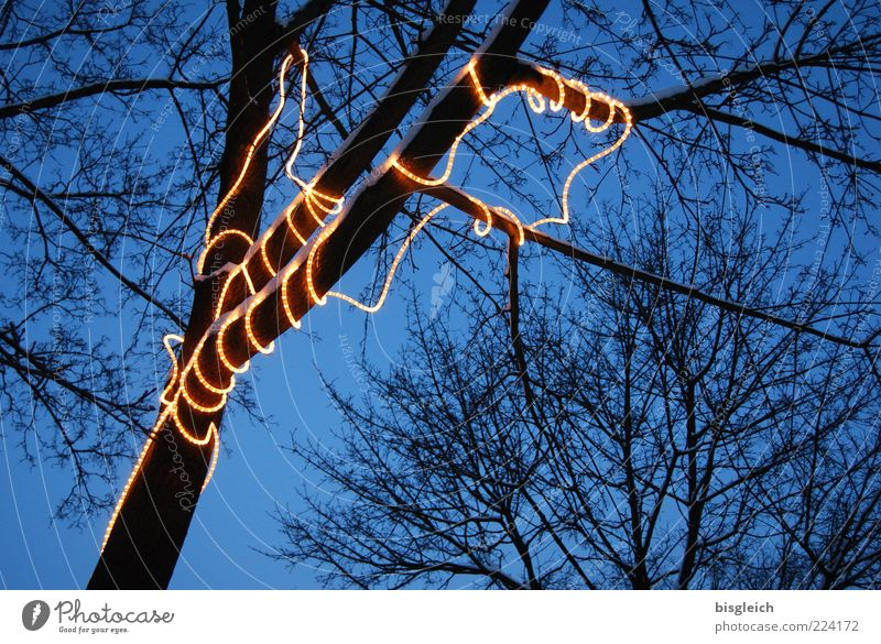 light chain Winter Tree Fairy lights Meandering Illuminate Blue Yellow Colour photo Exterior shot Evening Twilight Tube light Light object Christmas decoration
