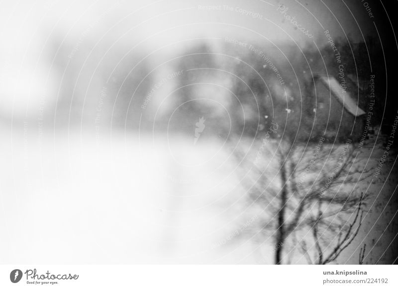 White Tree Winter Black House (Residential Structure) Environment Dark Snow Emotions Snowfall Ice Frost Village Unclear Abstract Distorted