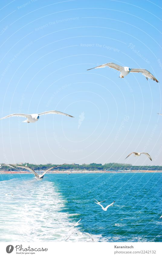Nature Vacation & Travel Blue Summer Water Landscape Sun Ocean Animal Far-off places Environment Freedom Bird Flying Dream Waves