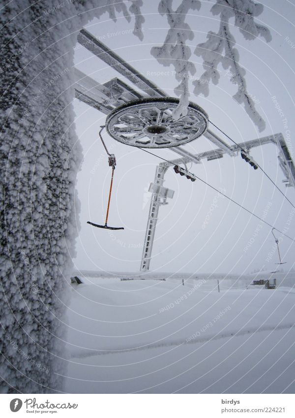 Tree Winter Cold Snow Sports Movement Ice Leisure and hobbies Frost Round Technology Snowscape Winter sports Ski lift Winter vacation Impulsion