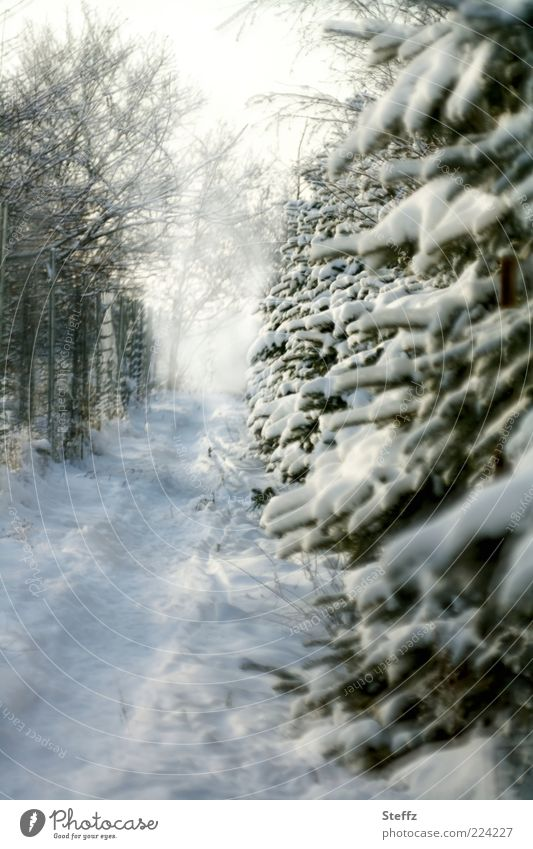Nature Tree Winter Cold Snow Lanes & trails Weather Fog Future Footpath Target Twig Fir tree Fir branch Winter mood Objective