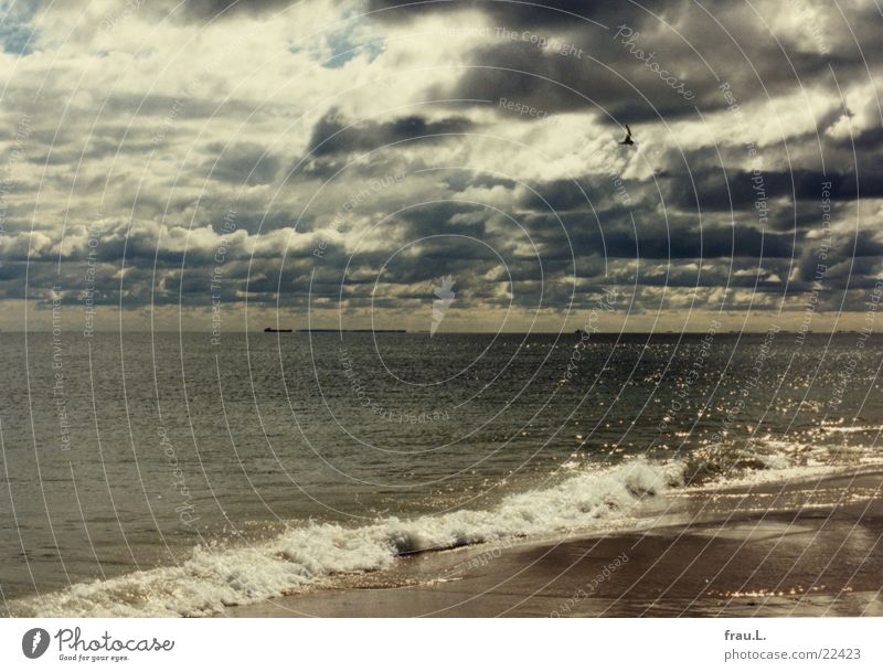 Skagen Beach Ocean Summer Dramatic Clouds Waves Coast Raincloud North Sea Denmark Sand seagull