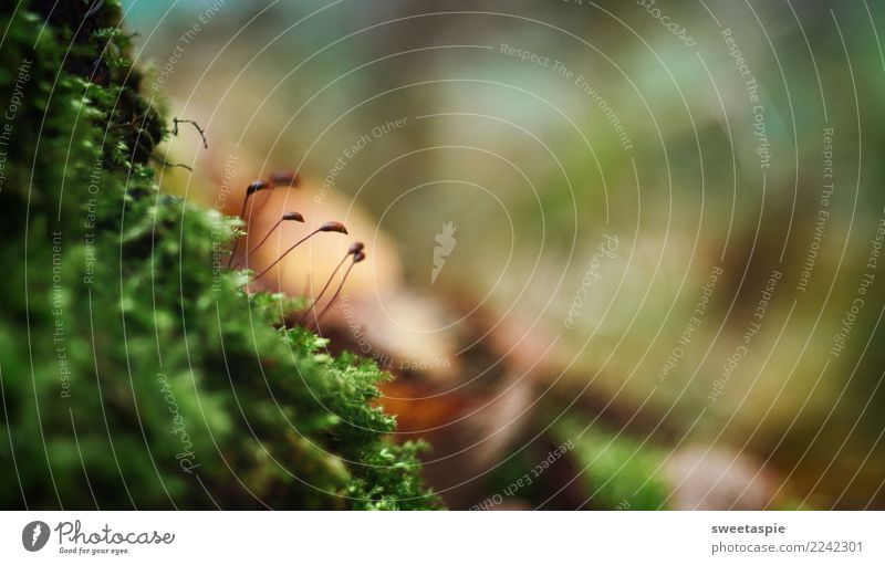 Moos-linge! Calm Hiking Nature Earth Autumn Carpet of moss Forest Relaxation Growth Wait Dark Near Wet Brown Green Together Solidarity Contentment Movement
