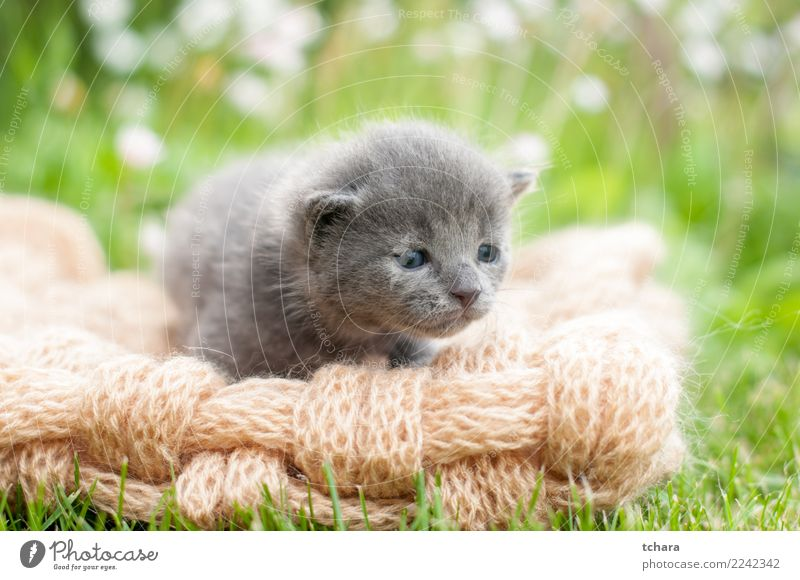 Grey kitty Cat Nature Beautiful Green White Animal Joy Black Funny Grass Small Playing Garden Baby Cute Pet