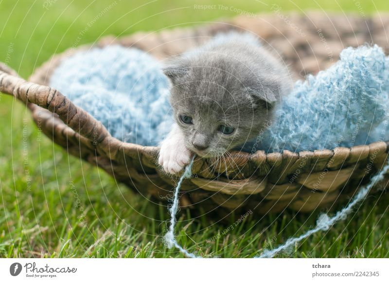 Kitty Cat Nature Beautiful Green White Animal Joy Black Funny Grass Small Playing Garden Gray Baby Cute