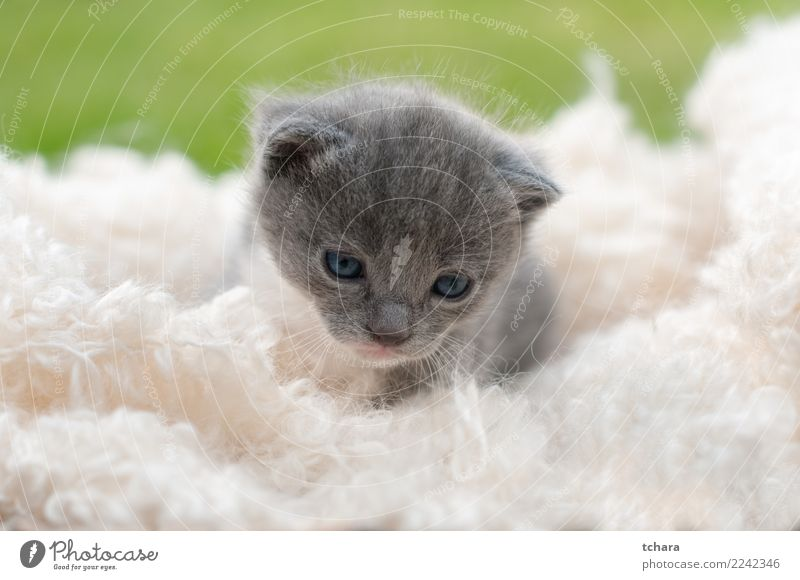 Kitty Joy Beautiful Playing Garden Baby Nature Animal Grass Fur coat Pet Cat Small Funny Cute Green Black White Kitten Delightful tabby background animals