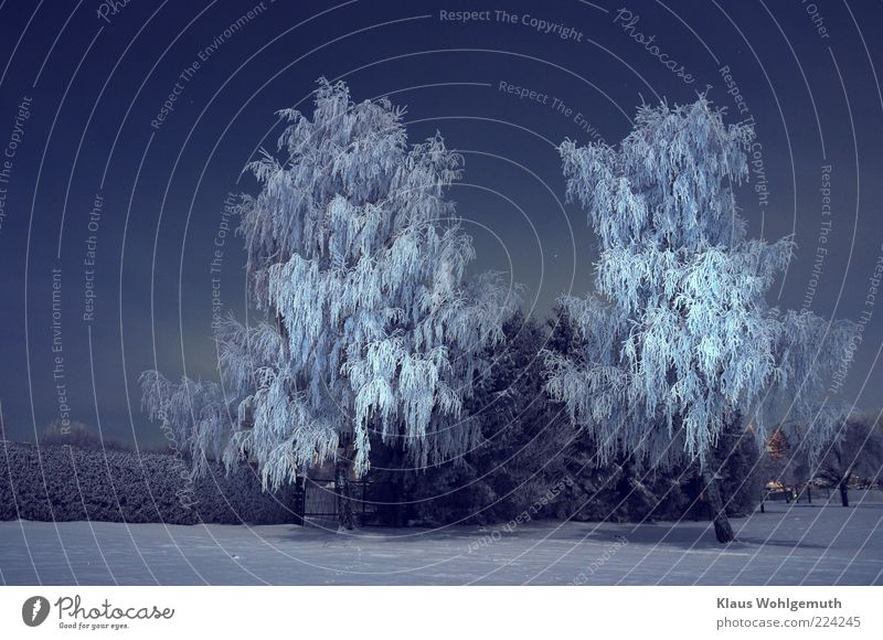 White Tree Blue Winter Calm Loneliness Cold Snow Environment Park Ice Stars Frost Frozen Freeze Bizarre
