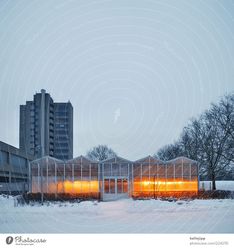 Winter House (Residential Structure) Cold Snow Warmth Glass High-rise Climate Growth Science & Research Illuminate Illuminate Attempt Building Laboratory Gardening