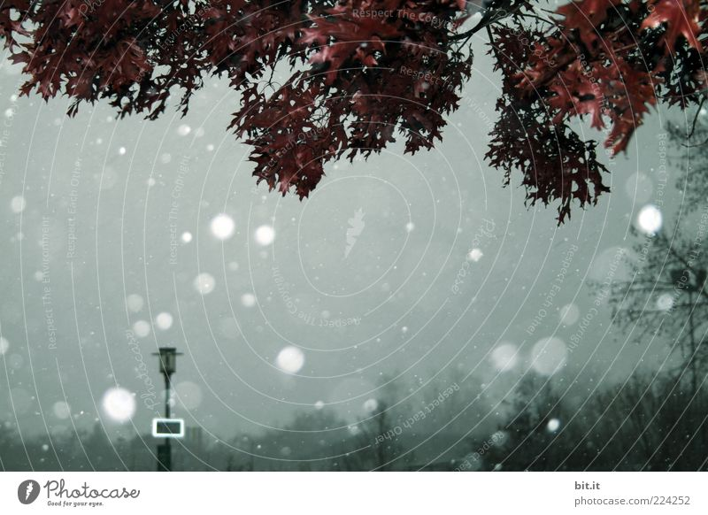 Sky Nature Tree Winter Leaf Cold Dark Snow Gray Environment Snowfall Park Weather Climate Lantern Bad weather