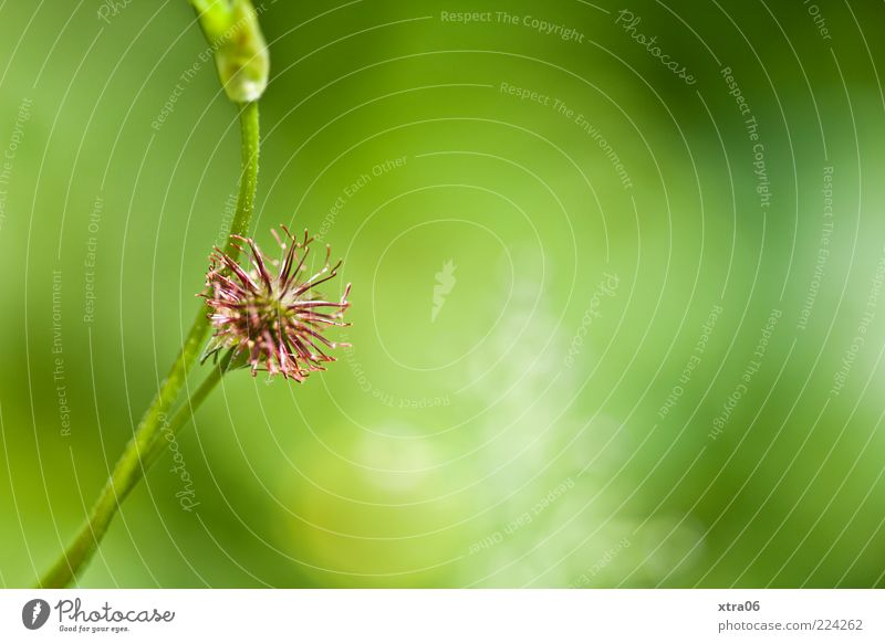 Nature Green Plant Blossom Environment Pink Blade of grass Faded Sunlight