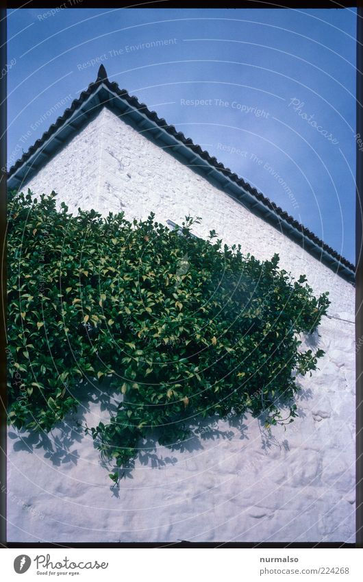 Nature White Green Blue Plant Leaf Wall (building) Environment Wall (barrier) Moody Art Facade Lifestyle Growth Wild Natural