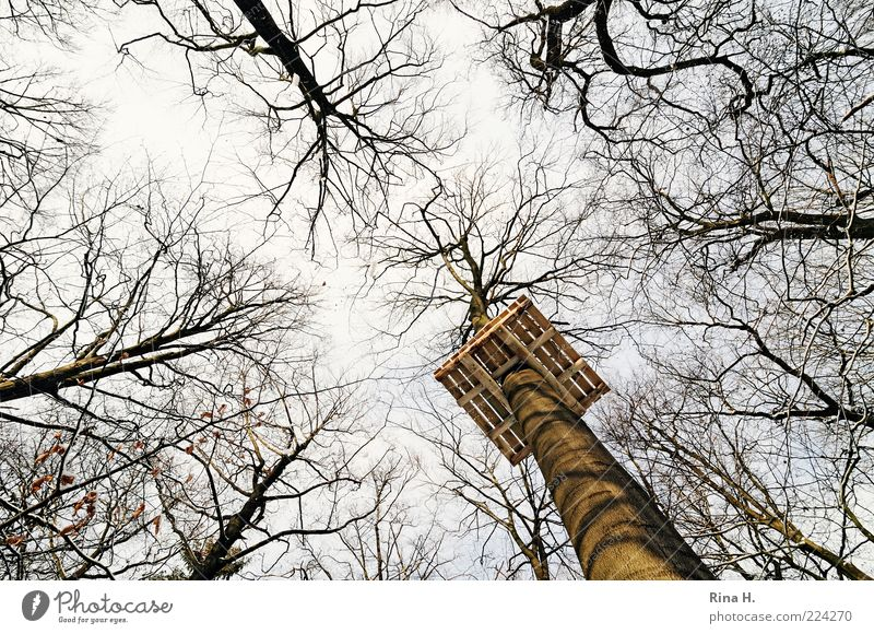 Our new high ropes course is being created for you here...... Lifestyle Leisure and hobbies Playing Environment Nature Landscape Winter Tree Forest Tall