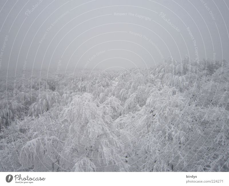 bird's eye perspective Nature Horizon Winter Fog Ice Frost Snow Forest Exceptional Bright Tall White Loneliness Peace Cold Climate Infinity Far-off places Tree