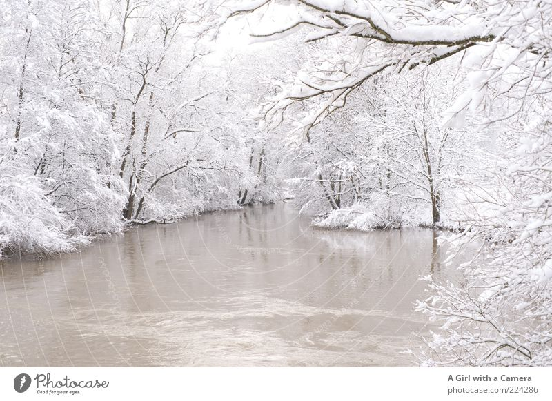 A Merry Xmas to you All Winter Ice Frost Snow Tree River bank Freeze Uniqueness White Cold Nature Covered Subdued colour Deserted Copy Space bottom Day