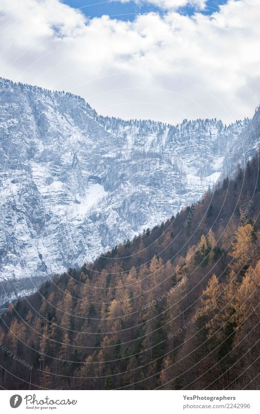 Autumn forest and snowy mountains Landscape Environment Snow Exceptional Difference Austria Coniferous forest Temporary Turnover Transition