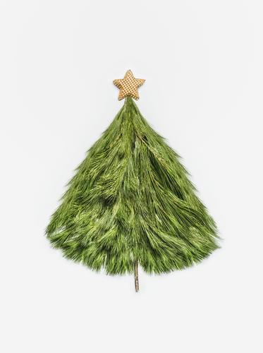 Christmas tree from cedar branches with gold star Style Design Feasts & Celebrations Christmas & Advent Decoration Sign Tradition Conceptual design Stars