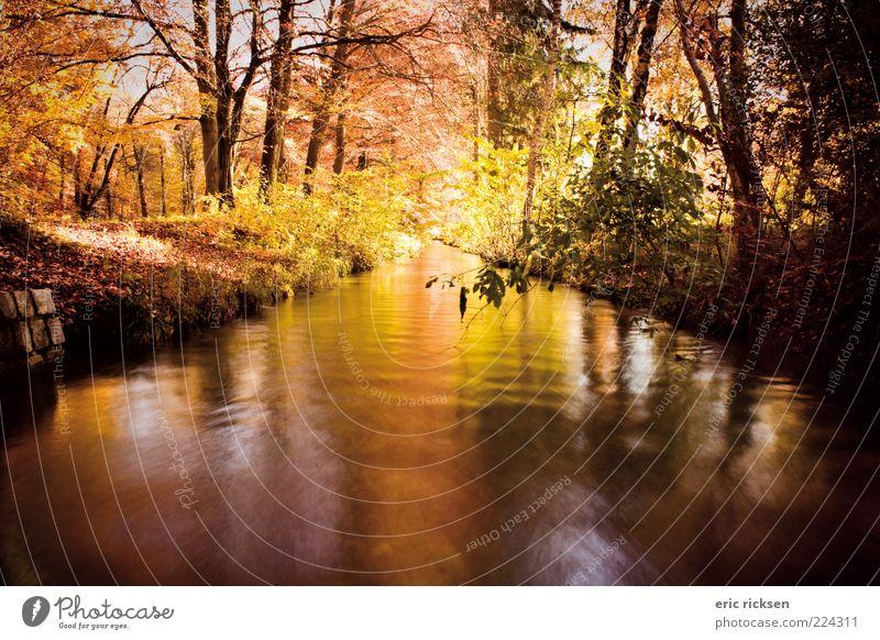autumn Environment Nature Landscape Plant Elements Air Water Sunlight Autumn Weather Beautiful weather Tree Bushes Park Forest River Colour photo Exterior shot