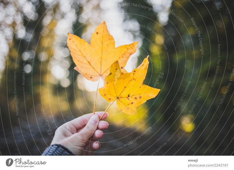 Nature Plant Leaf Yellow Environment Autumn Leisure and hobbies Beautiful weather To go for a walk