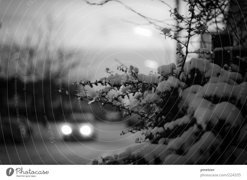 Winter Street Cold Snow Gray Movement Car Weather Ice Transport Climate Dangerous Frost Bushes Driving Mobility