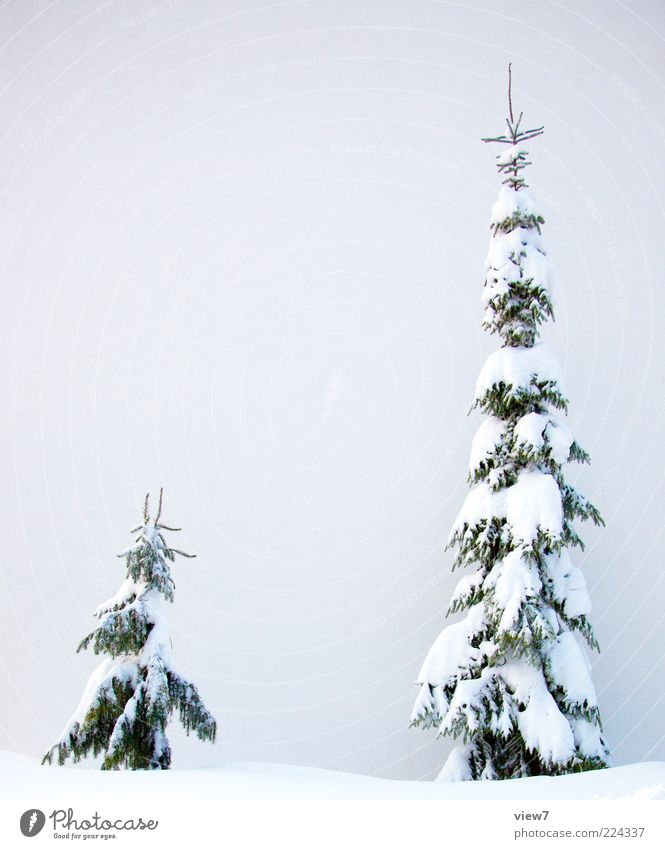 fresh snow Nature Winter Weather Ice Frost Snow Tree Authentic Thin Simple Fresh Large Cold Beautiful White Moody Virgin snow Fir tree Heavy Colour photo
