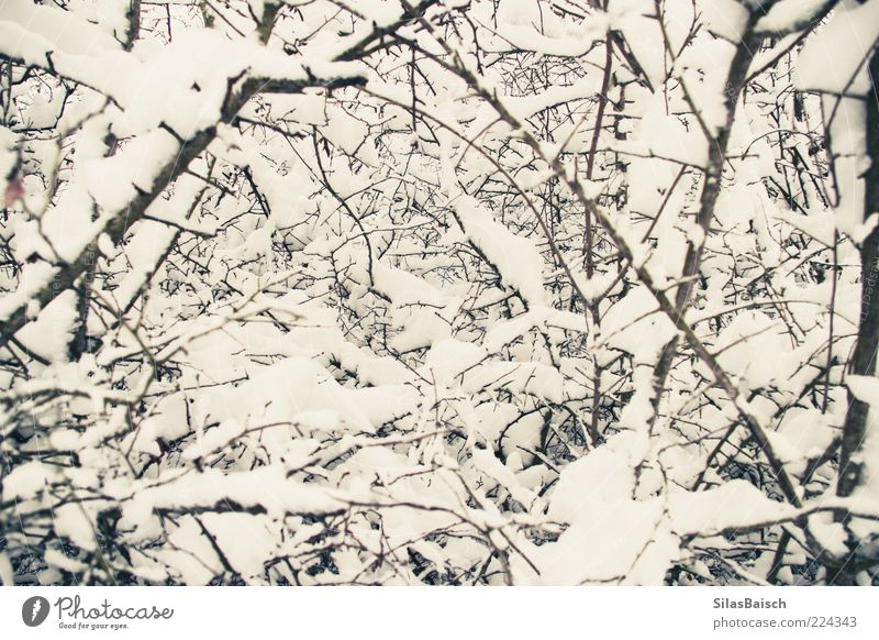 winter magic Nature Winter Ice Frost Snow Colour photo Exterior shot Twigs and branches Many Close-up Deserted Day