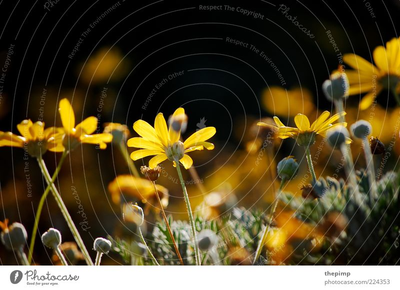 Autumn flowers II Summer Environment Nature Plant Flower Blossom Wild plant Multicoloured Yellow Colour photo Exterior shot Copy Space top Marguerite Sunlight