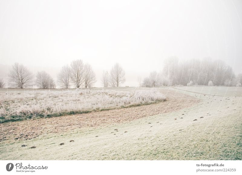 sugar landscape Environment Nature Landscape Plant Elements Earth Sky Horizon Winter Weather Fog Ice Frost Tree Grass Meadow Field Forest Cold Green White