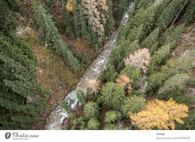 fluency Environment Nature Landscape Water Autumn Plant Tree Forest River Green Relaxation Colour photo Exterior shot Deserted Day Bird's-eye view Wide angle