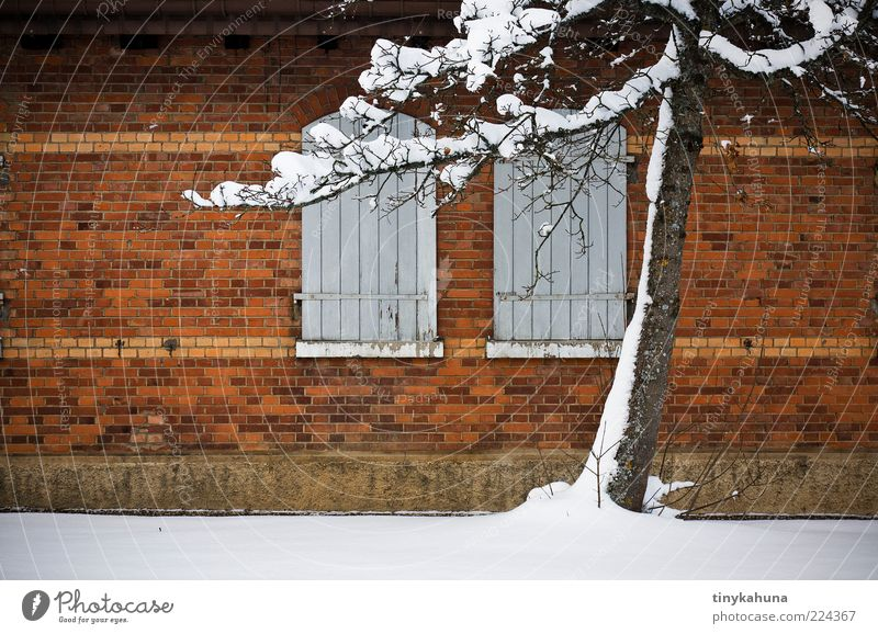 Old White Tree Winter Calm Loneliness Yellow Cold Snow Wall (building) Window Wall (barrier) Brown Closed Simple Past