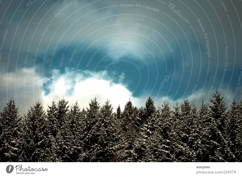 Sky Nature White Tree Blue Plant Clouds Winter Forest Snow Above Landscape Environment Weather Ice Wind