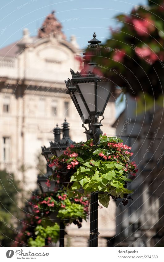 ornamental Plant Flower Budapest Capital city Old town Building Green Black Street lighting Candelabra Old fashioned flower decoration Decoration Beautiful